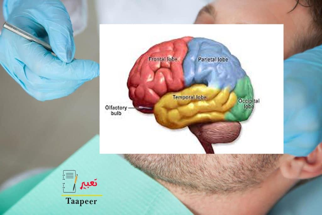 ما هو غذاء المخ 1